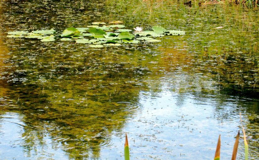 Erholung im Botanischen Garten, Osnabrück