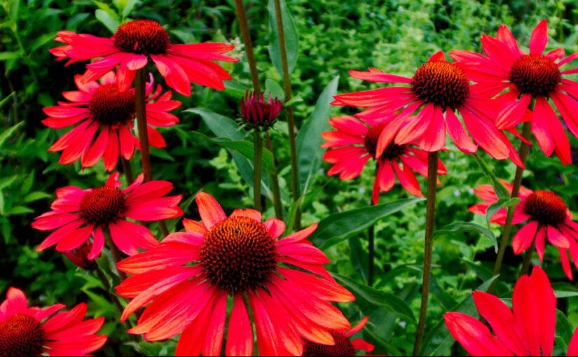 in voller Blüte, Lächeln der Erde