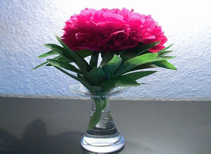 Pfingstrose in der Vase